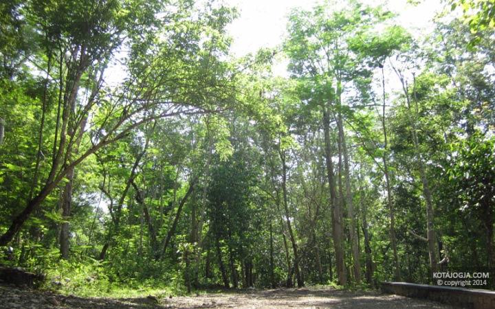 Suasana Di Hutan Wanagama
