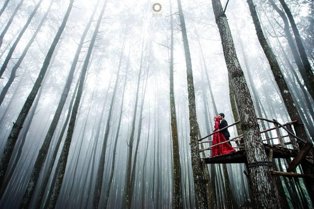 Hutan Pinus Mangunan (sumber foto: Alvin Photography)