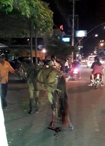 Kusir Menggiring Kudanya untuk Dibawa pulang Ke Mejing (Dok. FB Aris Gelaktawa di ICJ)
